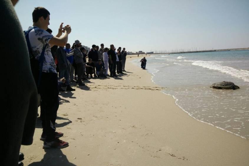 הצבים שפע ורונן חזרו לים