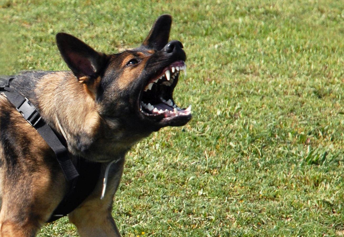 מרענן העירייה בהודעה חשובה לבעלי כלבים באשדוד - אשדוד אונליין PU-42