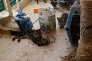 21 חתולים ו- 3 כלבים חולצו לאחר שהוחזקו בתנאי הזנחה