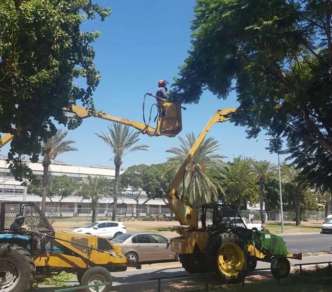 חברת חשמל מבצעת גיזום עצים הקרובים לקווי חשמל