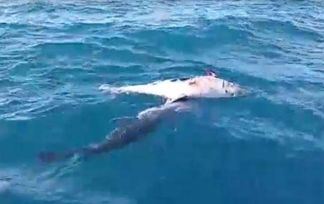 קורע לב: דולפין מתקשה להפרד מחברו המת מול אשדוד