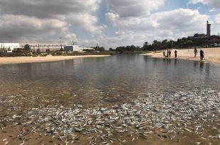 זיהום חמור בנחל לכיש – אלפי דגים מתו