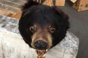 ראש של דוב: זה מה שמצאו במכולה שהגיעה לאשדוד