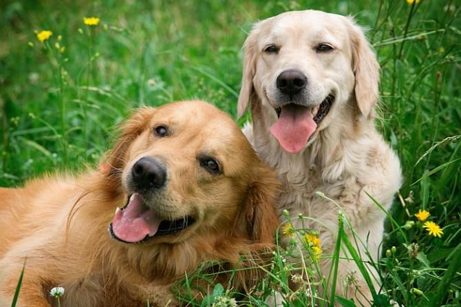 כלבים בכלבייה של אשדוד