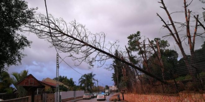 עץ שנפל על חוטי חשמל