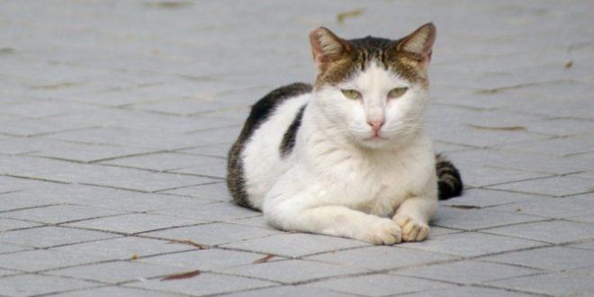 """פנסיונר שנפל במדרגות בגלל חתול, תובע רבע מיליון ש""""ח"""