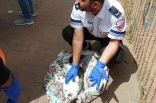 """חובש מד""""א ביצע החייאה על חתול שנפצע אנוש בשריפת דירה"""