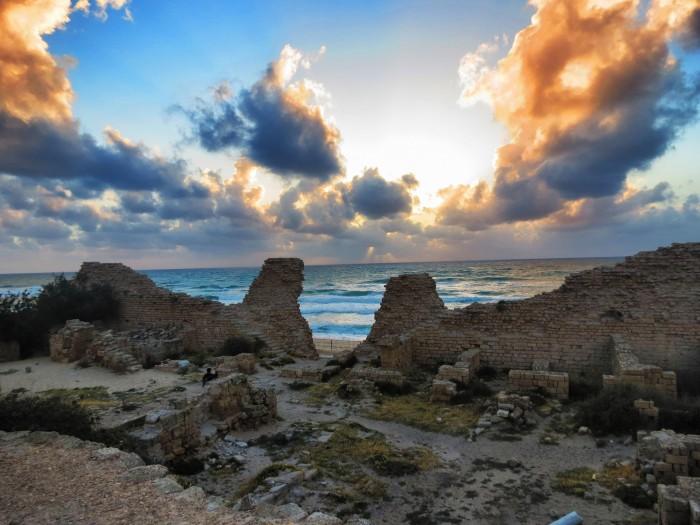 צבת ים הטילה ביצים בחוף המצודה