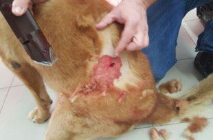 אירוע אלימות חמור הסתיים בדקירות ובכלב פצוע