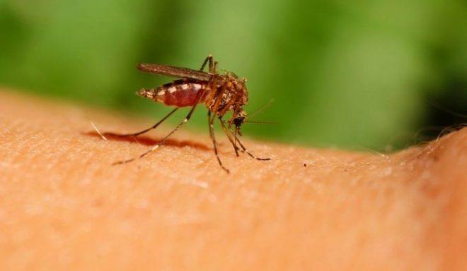 הגשם החריג שירד עלול להביא למכת יתושים באזור