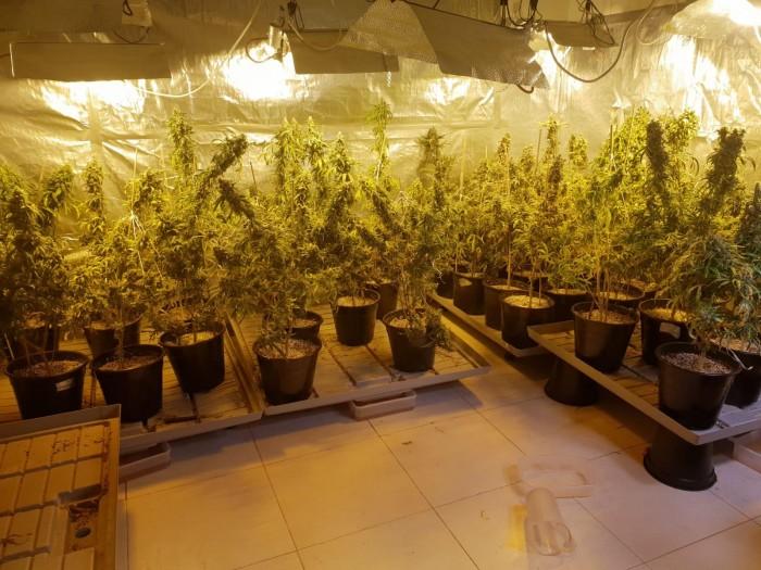 המשטרה חשפה דירות באשדוד ששימשו למעבדות סמים