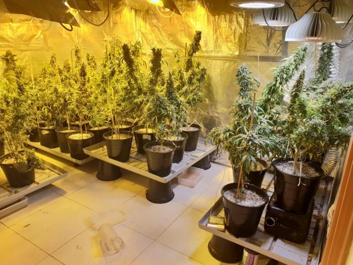 משטרת אשדוד חשפה ארבעה דירות ששימשו כמעבדות סמים