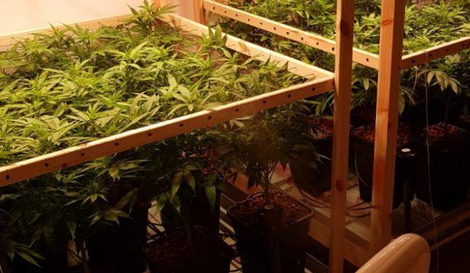 סוכן סמוי הפליל עשרות עצורים בפרשת ענק של סחר בסמים