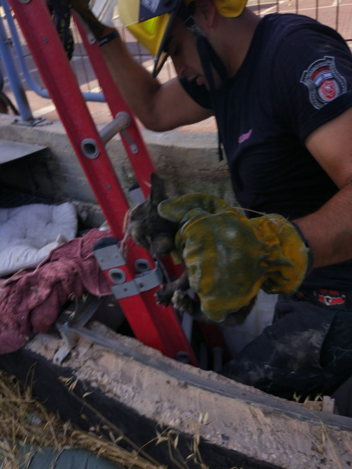 לוחמי האש חילצו גור חתולים שנפל לתעלת ביוב